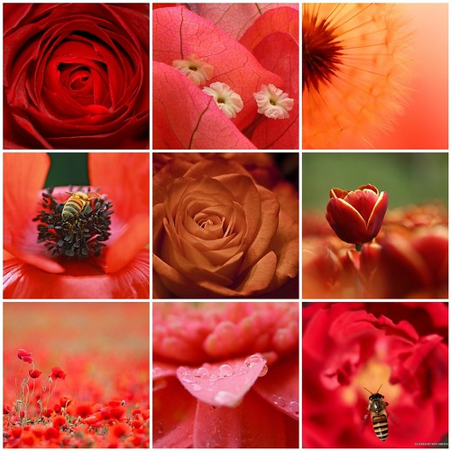 Things i ♥ Thursdays - 04| Red Flowers (by Kate Iasna)