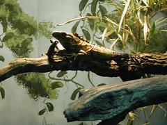 Zoo of Denver  DSCN0177_1