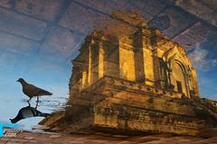 layers (muha...) Tags: reflection water thailand nikon pigeon monk monastery chiangmai layers muha muhaphotos dsc6067 nikon2470mm nikond700