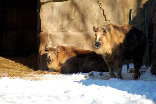 zoo 207