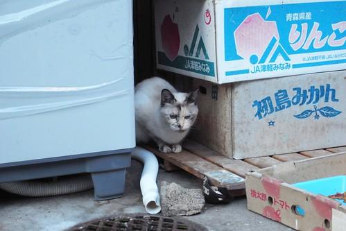 Today's Cat@2010-02-18