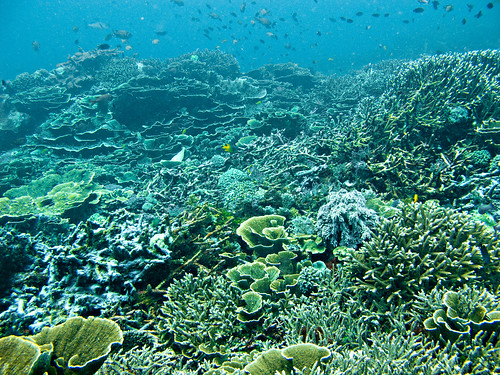 Flores Underwater 05