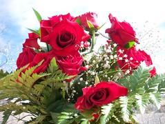 Valentines Day Flowers 025 (Matt Hays) Tags: flowers red roses white flower green rose breath redrose pro valentines february 19 babys 2010 redroses babysbreath 21910 valentinesdayflowers proflowers february192010 2192010