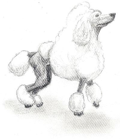 Poodle 02