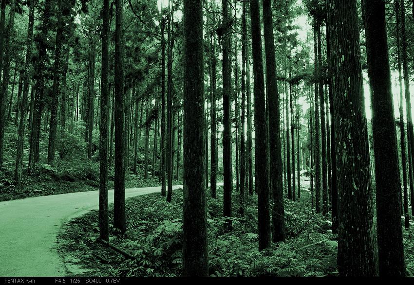 溪頭的竹子 (沒拍竹子...)