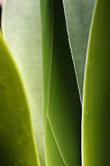 100mmMacrof/2.8 (GILBERTO CAMPOS) Tags: travel pink macro green tourism nature yellow leaf arquitectura playa el salvador elsalvador turismo hdr playas impresionante suchitoto lalibertad cuscatlan imagesofelsalvador platinumphoto puertodelalibertad elpulgarcitodeamerica homersiliad natureselegantshots