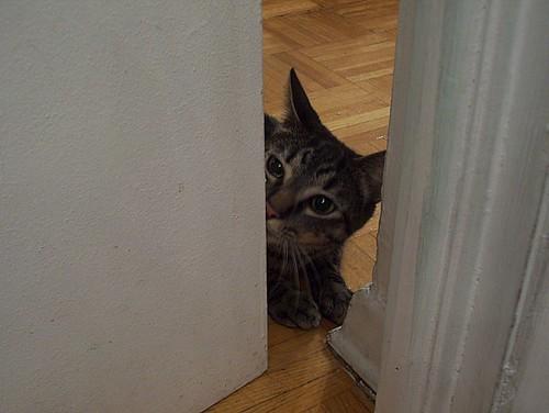 Shakespeare peeking around the corner (2)