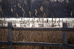 Rouge River (A Great Capture) Tags: park winter light toronto ontario canada cold ice nature fence frozen wooden freezing can woodenfence to scarborough marsh february 2010 on lhiver scarboro rougeriver ald ash2276 ashleyduffus ald bluffersparkrougeriver ashleydufffus ashleysphotographycom ashleysphotoscom ashleylduffus wwwashleysphotoscom