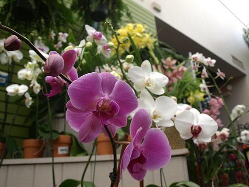 flowershop 001