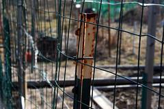 garden fence 061