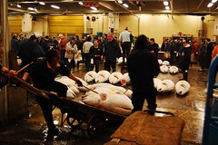Tuna auction at Tsukiji