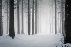 Looking for the Light (andywon) Tags: trees winter light white mist snow fog forest germany way landscape deutschland path natur schwarzwald blackforest badenwrttemberg kandel explored