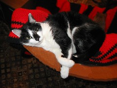 Lovie, lounging on the back of a recliner (Hairlover) Tags: pet cats pets public cat kitten kitty kittens kitties 16yearoldcat hairlover allcatsnopeople