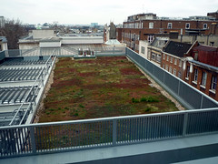 'Green' Roof
