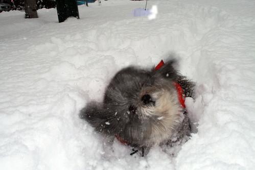 Foto cane divertente con neve