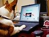 playing on the net (moaan) Tags: dog net notebook corgi internet welshcorgi personalcomputer pochiko surfingonthenet gettyimagesjapanq1 gettyimagesjapanq2