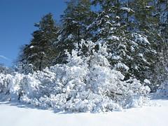 Dogwood collection (Tie Guy II) Tags: winter snow garden landscape arboretum dogwood february 2010 morrisarboretum cornus