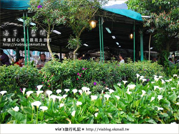 【2010竹子湖海芋季】陽明山竹子湖海芋季~海芋盛開囉!17