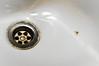 Araña suicida (El gallo ninja) Tags: bathroom spider suicide araña cuarto baño suicida bidé