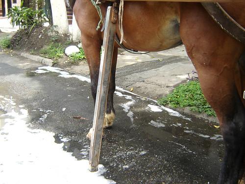 """Carlos Javier Noguera , propietario de la carreta, explicó que este sostén sirve para que el caballo descanse. El niño Juan Esteban dijo además que """"Pájaro"""" estaba """"descalzo"""": """"Se le acabaron las herraduras"""". En la imagen pueden verse los restos de agua y"""