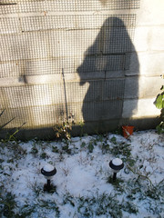 Snow & Stello in the garden