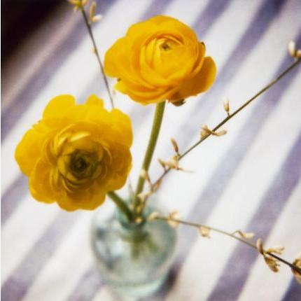 yellowsusannahconway
