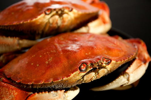 Cooked dungeness crabs