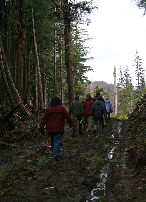 several people walk on a muddy logging road, Kasaan, Alaska