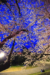 Cherry Blossoms Viewing (Spice  Trying to Catch Up!) Tags: pink blue trees sky people plants white flower green art grass festival japan night canon cherry geotagged asian photography eos japanese lights spring interesting sand asia flickr colours shadows image blossoms picture vivid blogger livejournal collections april  5d trunks vox  viewing    gettyimages 2010 facebook  friendster multiply          twitter canoneos5dmarkii  twitpic  cherryblossomsviewing