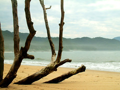 lYY/ (...anna christina...) Tags: travel vacation plant beach nature brasil riodejaneiro plantas natureza viagens trindade supershot annachristina mywinners flickraward onlythebestofnature annachristinaoliveira