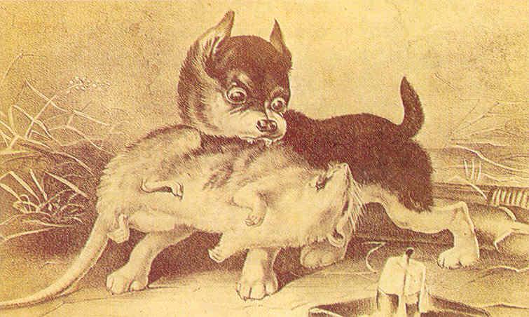 pelea de perros y humanos
