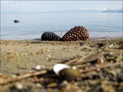 Pinecones and shells at lake's edge