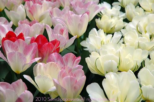 Tanti fiori bianchi