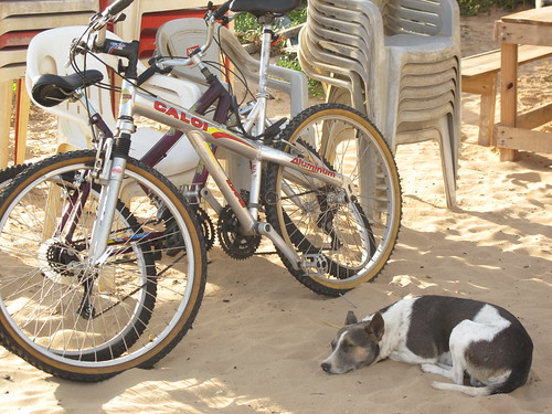 praia perro