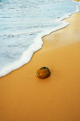 "Coconut washed onto a tropical ocean beach, #7 of 7 (IronRodArt - Royce Bair (""Star Shooter"")) Tags: ocean morning travel sea vacation holiday reflection abandoned beach nature wet water fruit sunrise outdoors hawaii bay coast sand coconut background sandy tide straw wave sunny palm resort exotic wash coastal shore foam kauai tropical tropic washed nut splash idyllic daybreak seafoam laying ashore surfy"