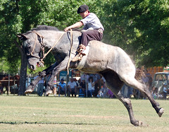 El 'desbocao' (Eduardo Amorim) Tags: horses horse southamerica argentina caballo cheval caballos cavalos pferde cavalli cavallo cavalo gauchos pferd pampa hest hevonen chevaux gaucho  amricadosul hst gacho  campero amriquedusud provinciadebuenosaires  gachos  sudamrica sanantoniodeareco suramrica amricadelsur  areco sdamerika jineteada   pampaargentina camperos americadelsud gineteada  americameridionale campeiros campeiro eduardoamorim iayayam yamaiay pampaargentino