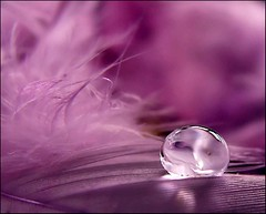 Another bubble.. (Mary Trebilco) Tags: pink macro water waterdrop bokeh feather drop bubble droplet supermacro crystalball canonpowershots3is platinumpeaceaward