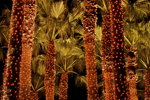 Orange Star Palms