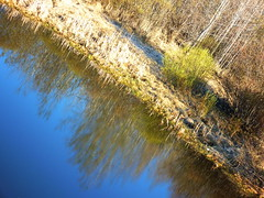A fresh slant on spring (peggyhr) Tags: blue trees sky canada green water reflections spring diagonal fave alberta wetlands grasses slough willows peggyhr bluebirdestates p1050529a