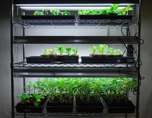 seedling shelf