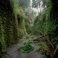 Fern Canyon (peterbaker) Tags: california fern green canyon riverbed walls jurassicpark ferncanyon redwoodnationalforest kh12
