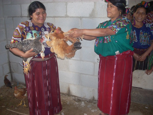 A woman from the community receiving chickens. - c.Muixil