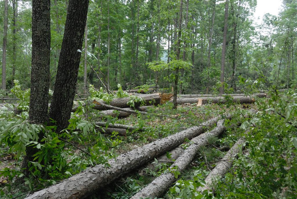 US.forest service management plan for endangered species habitat   5-7-10 016