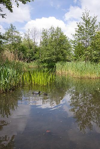 Camden Natural Park