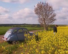 Pissing near a 2cv in a field (Stinoo) Tags: field citroën 2cv normandie veld eend champ geit normandië 2pk deuche