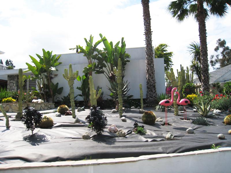 cactus+flamingo+front yard