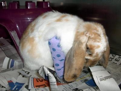 bunny-broken-leg-cast-400x301