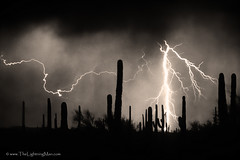 2nd Shot - 1st Storm - Sepia (Striking Photography by Bo Insogna) Tags: arizona cactus sky bw southwest weather electric sepia night clouds skyscape dangerous energy power desert flash extreme nightime monsoon electricity strike bolts lightning saguaro lightening awe striking storms spark charge thunder typhoon voltage thunderstorms thunderhead discharge severeweather thunderbolt timedexposure chasers thundershower lightningstorm lightningstrikes cloudtoground cloudtocloud lightningimages lightningart lightningphotography lightningpictures lightningphotos lightningstorms lightningprotection extreameweather lightninggallery lightneninggallery lightningposter pictureoflightning lightningstormpictures lightningphotoscolorado picturesofstormcloudsandlightning lightningphotogalleries lightningboltphoto photosoflightning photographylightning