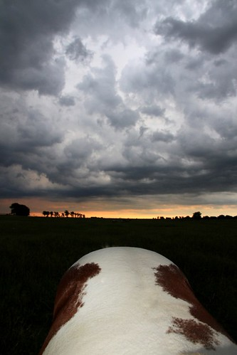 Horse and Clouds Symmetry