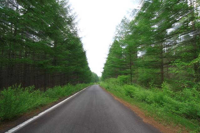 疾走感のある森の道路